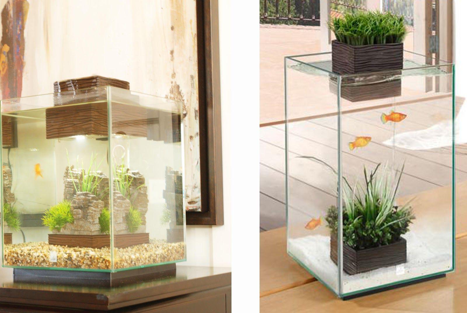 Mini Manor Blog/Chi Fish Tank Fish tank, Cool fish tanks