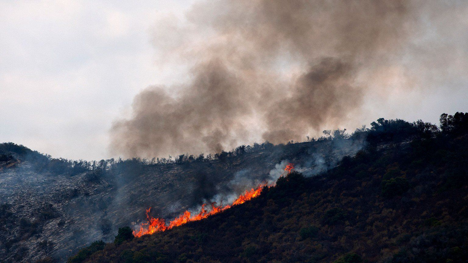 A Gel That Makes Trees Fire Resistant Could Help Prevent Wildfires