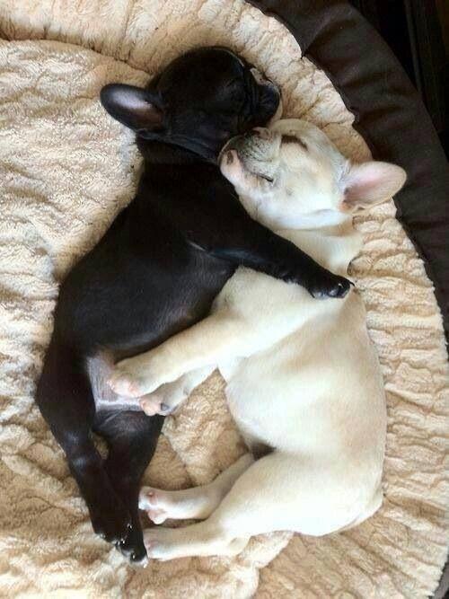 cutest thing ever! interracial dog love ftw! haha