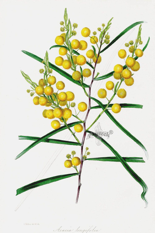 Pin on botanika/botanica art