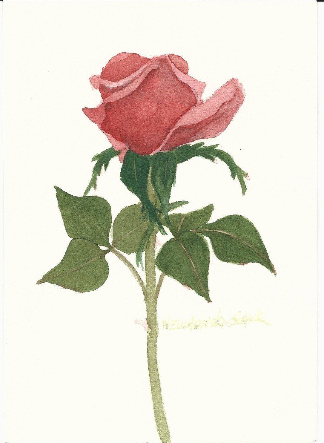X Ray Of Rose Watercolor Amazing Tattoo For Me Yeti: Red Rose 5 X 7 Original Watercolor By Wandazuchowskischick
