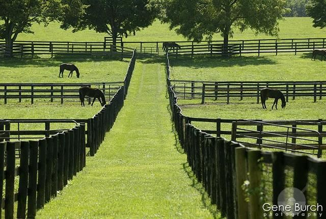 Marsha Harris Scott Splenderosa Horse Farm Ideas Horse