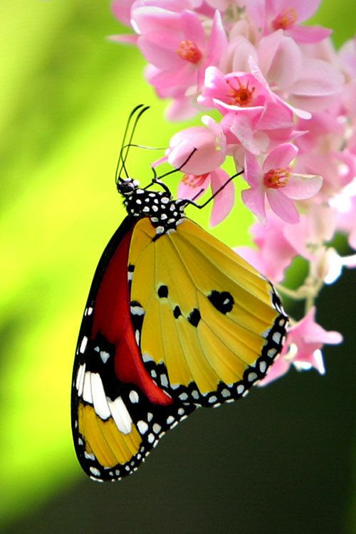 Pictures Of Pretty Colorful Butterflies