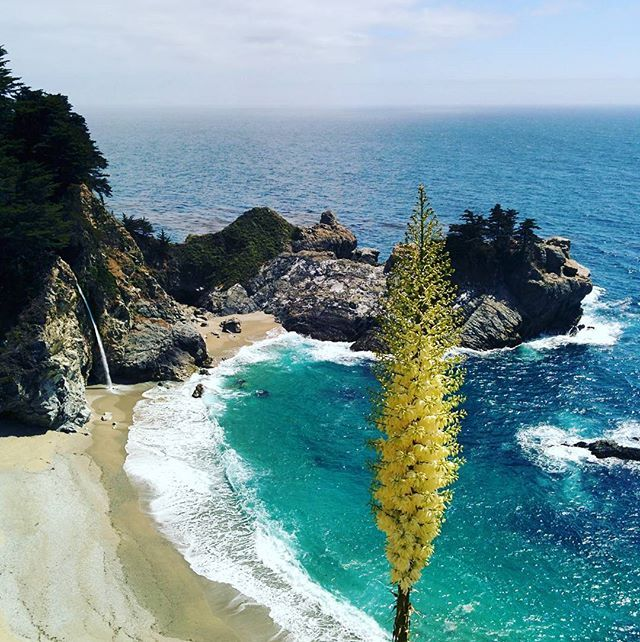 Rainy days call for sunny memories: last year same day... 🌅☀️😎💛 #california #californiahighway1 #bigsur #takemeback #adventure #hiking #roadtrip #liveauthentic #bigsurlocals #montereybaylocals - posted by  https://www.instagram.com/segolenerousseau - See more of Big Sur at http://bigsurlocals.com