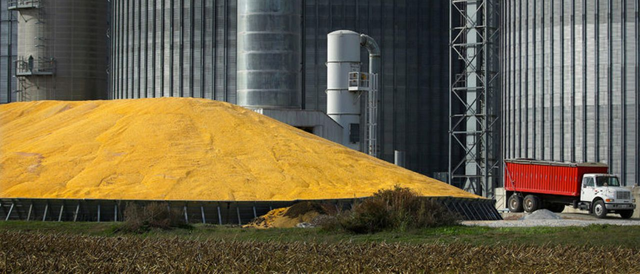 Expansive Report On GM Crops Finds They Are Safe, Pose No Health Risks http://futurism.com/expansive-report-on-gm-crops-finds-they-are-safe-pose-no-health-risks/?utm_campaign=coschedule&utm_source=pinterest&utm_medium=Futurism&utm_content=Expansive%20Report%20On%20GM%20Crops%20Finds%20They%20Are%20Safe%2C%20Pose%20No%20Health%20Risks