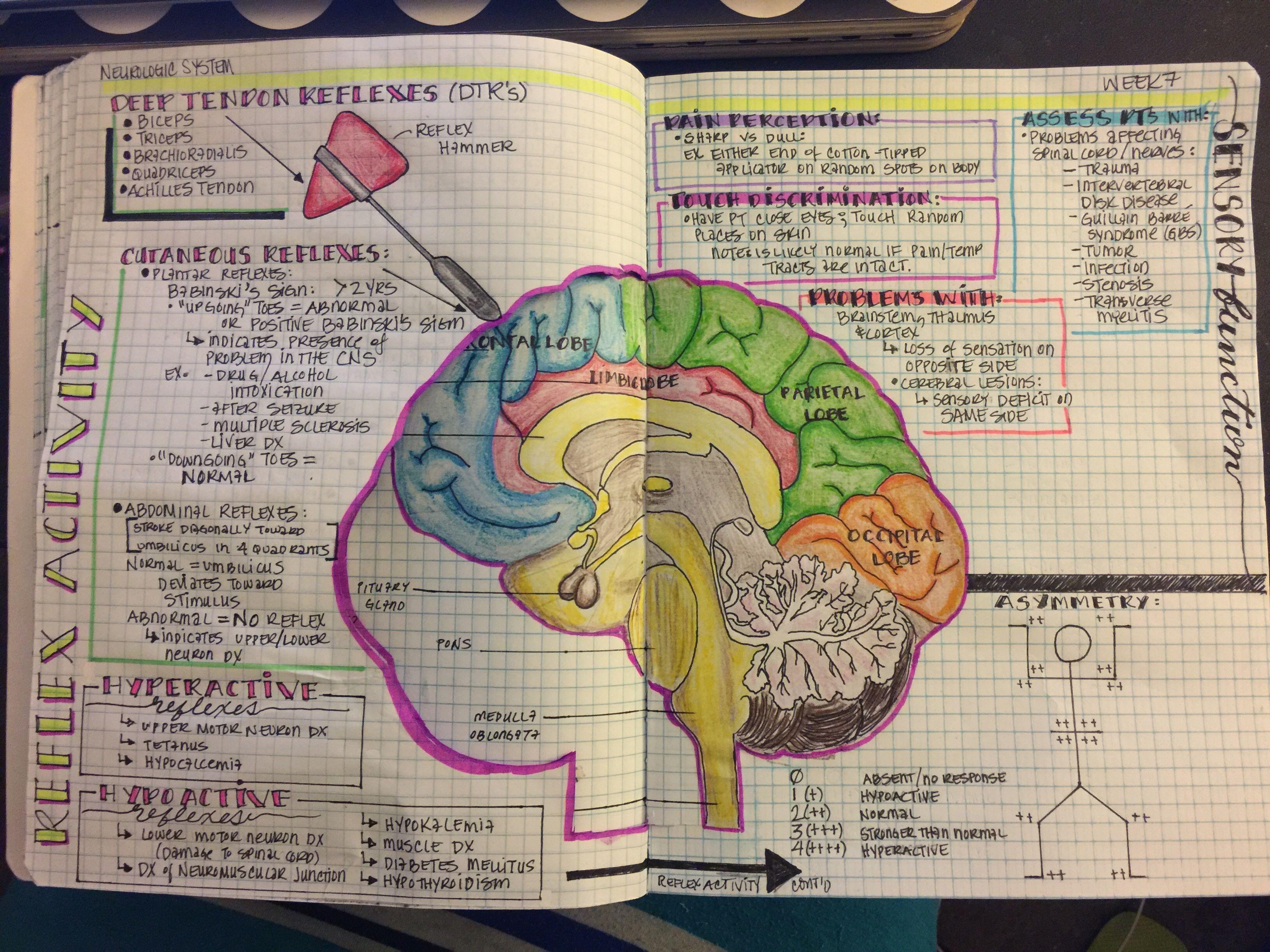 Pin by Ja Dii on Nursing School | Pinterest | Med school, Cranial ...