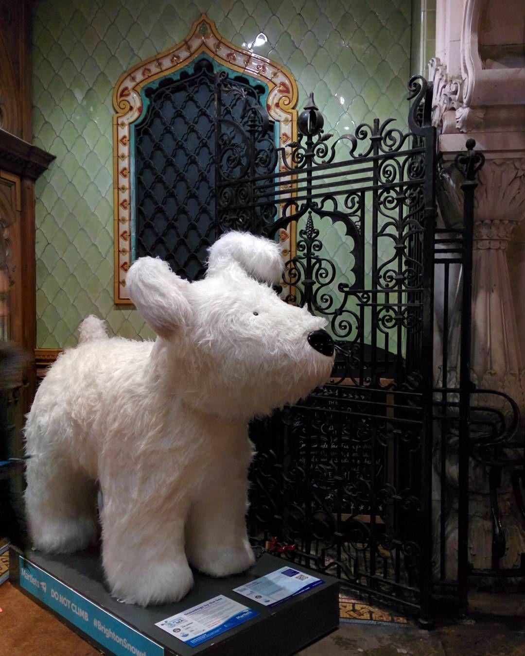 Very cute #snowdog #Brighton #BrightonDome #brighton_ig