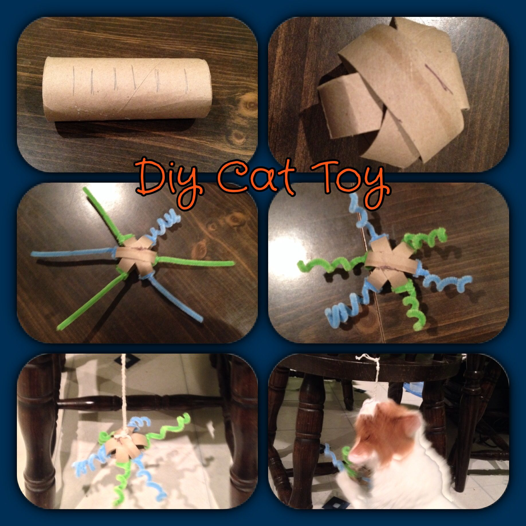 Diy toilet paper roll cat toyinstructions on their way