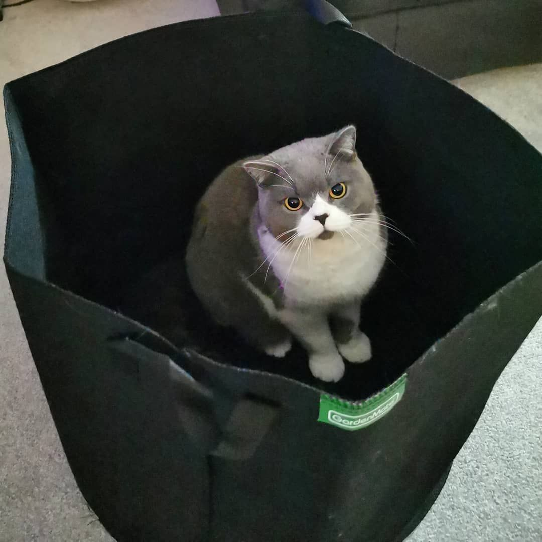 Our Curious Cat Checking Out The Size Of Next Years Grow Bag I Reckon Its A From Him We Have 5 Of These 25 Gallon Bags Grow Bags Gallon Bag Curious Cat