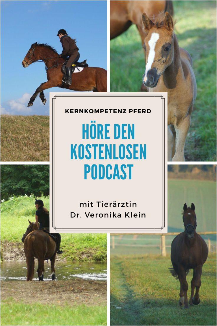 Wissen über Pferde