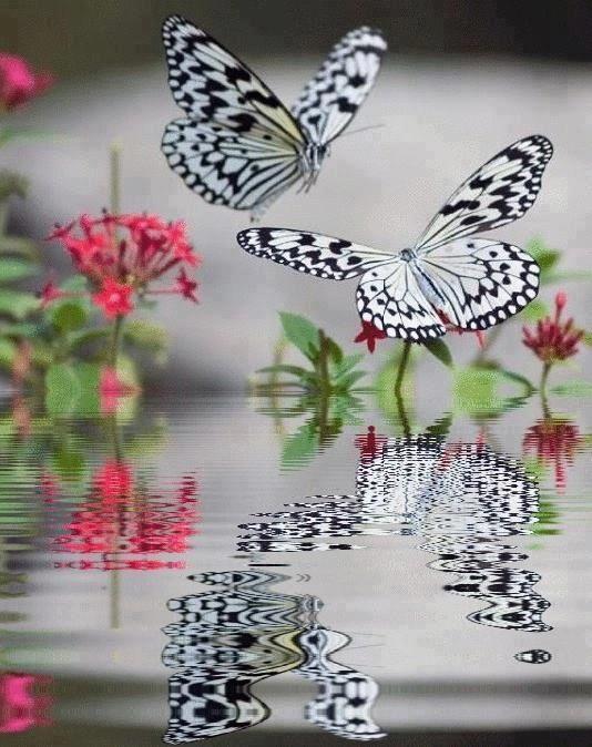 ~~~reflection~~~