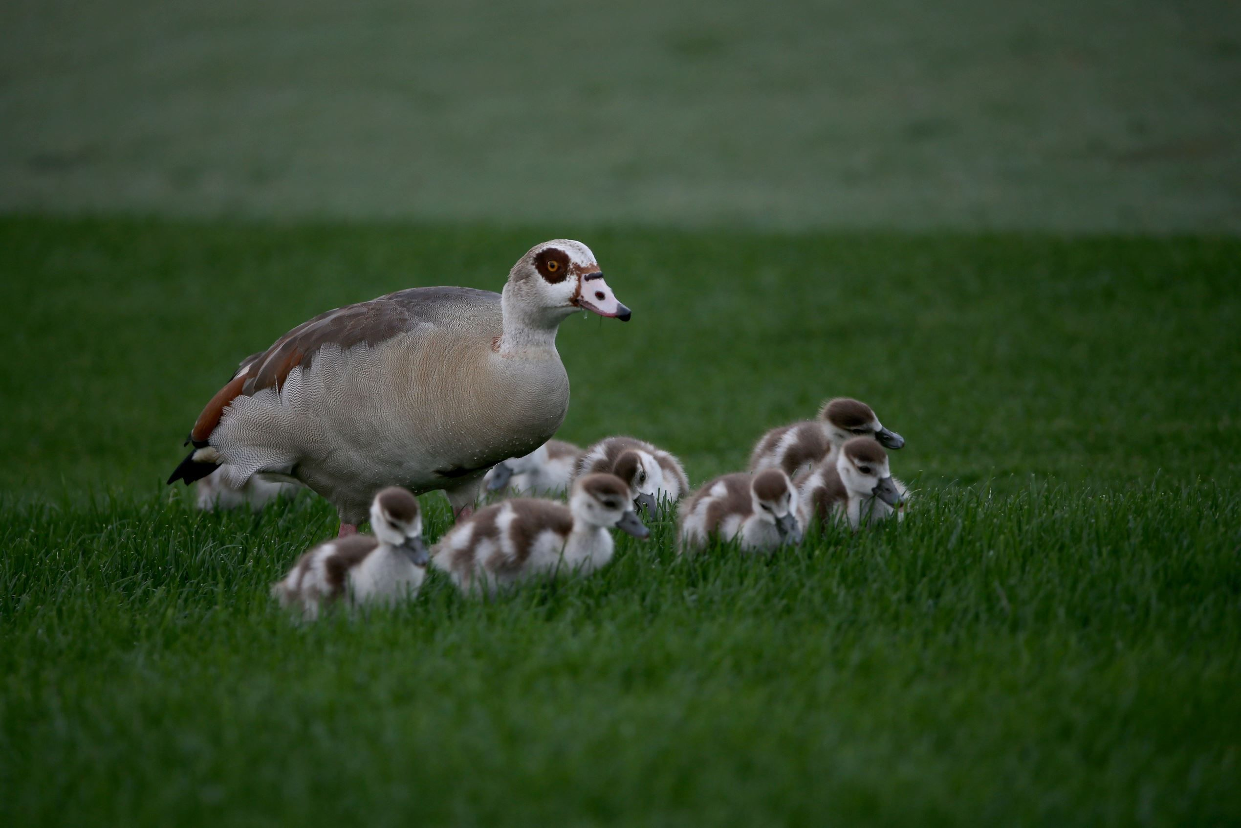 Photos Adorable Baby Animals With Their Moms