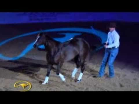 """Clinton Anderson with his amazing horse """"Mindy"""" in Vegas 2010  Clinton gives an unforgettable liberty/freestyle groundwork demonstration with Mindy, his 16 year-old Australian Quarter Horse mare.    This amazing display of true horsemanship is cut from the first few minutes of Clinton Anderson's 2010 TV Show """"On Tour"""" with Clinton Anderson as aired on RFD-TV every Tuesday and Sunday."""