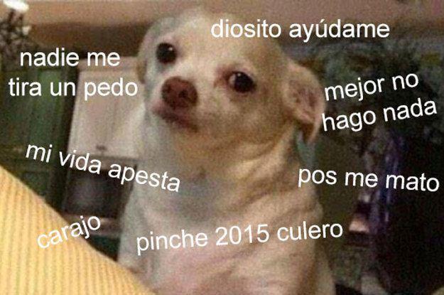 18 Veces En Las Que El Meme Del Perrito Reflejo Tu 2015 A La Perfeccion Perrito Memes Perros Chihuahua Meme
