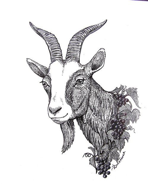 Goat Face Drawing