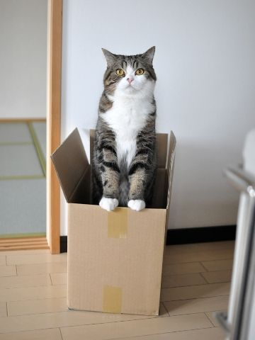 Maru's affair with boxes