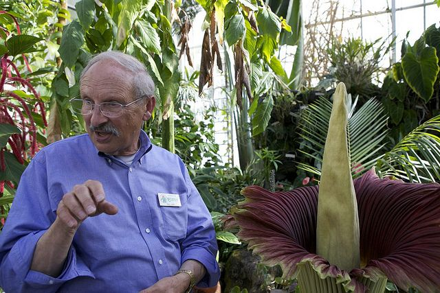 Dr Paul Licht Director Uc Botanical And The Corpse Flower Maladora Corpse Flower Botanical Titan Arum