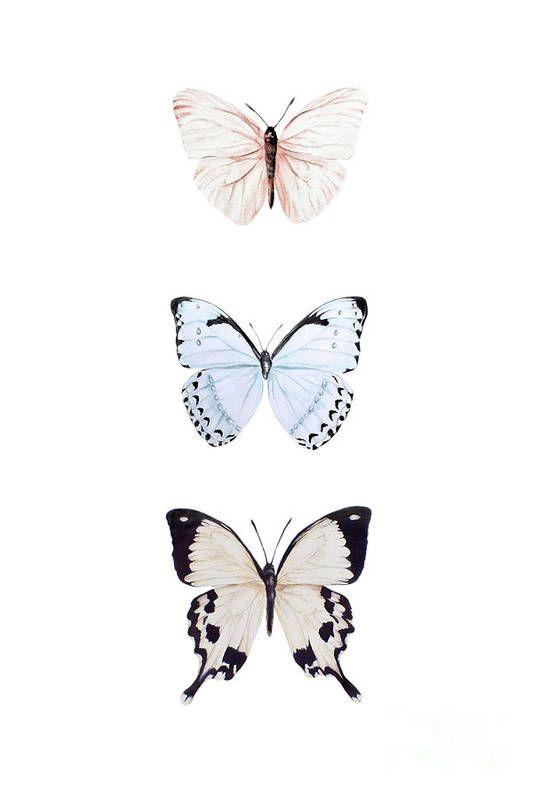 Three Butterflies Art Print by Marie Burke