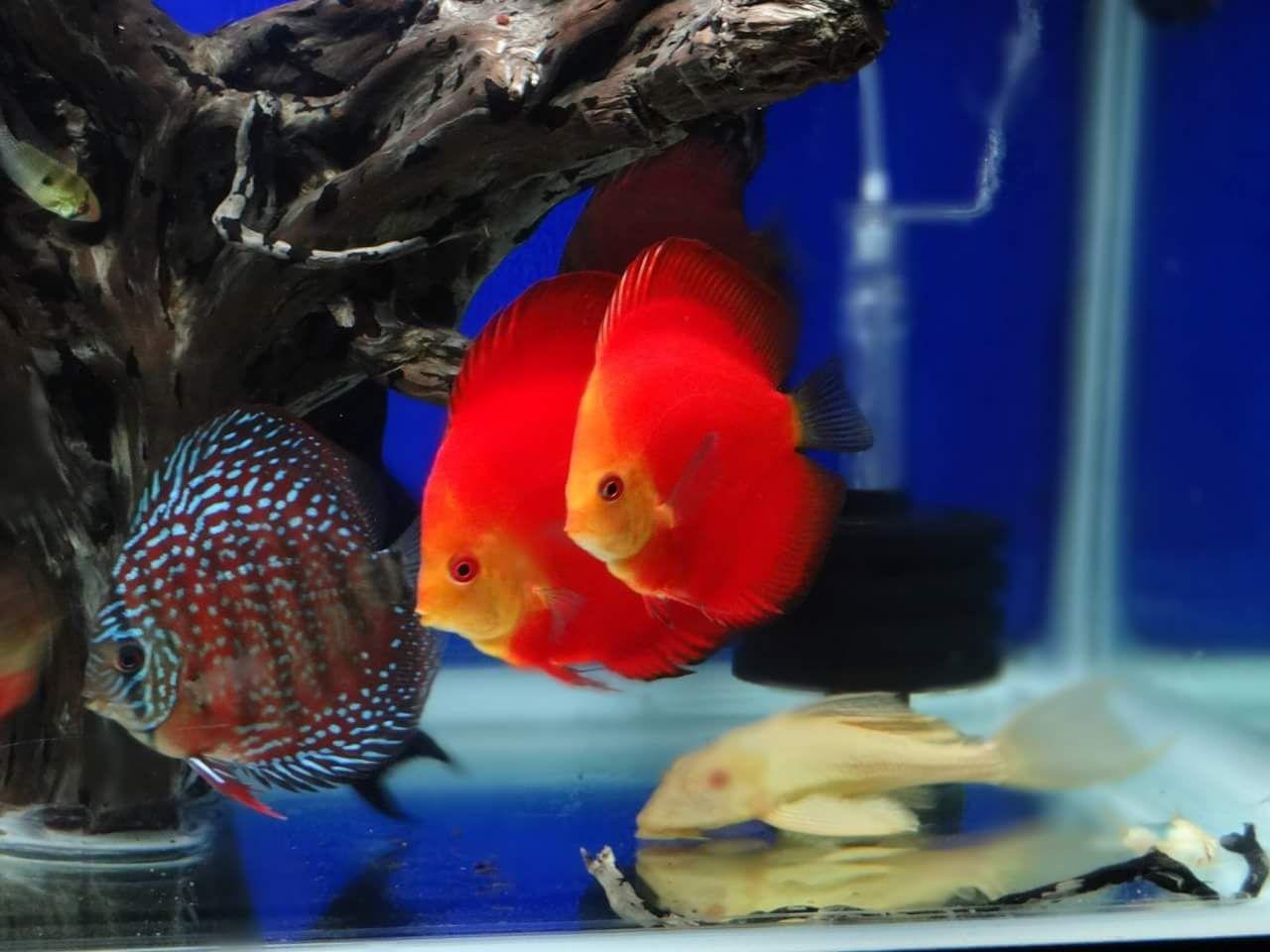 discus #Aquarium #Fresh water #Fish #Plants #Follow #수족관 #민물 ...