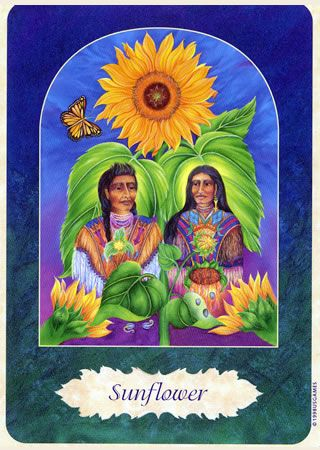 Image Sunflower Flower Essences Flower Remedy Flowers