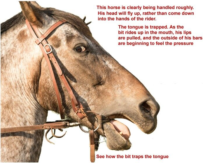 Ring Snaffle Definition