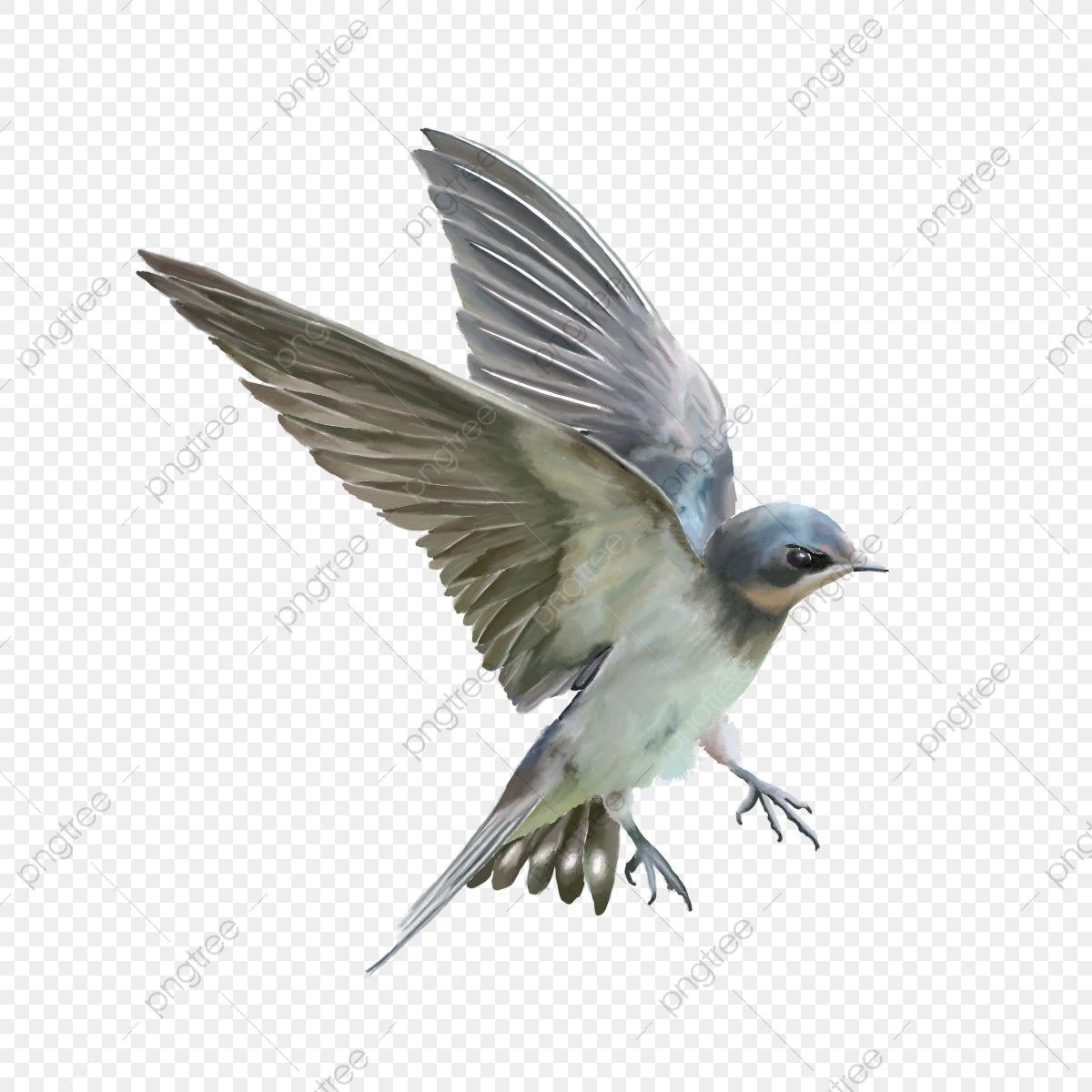 Passaro Voador Vivido Bonito Belo Passaro Passaro Voando Passaro Imagem Png E Psd Para Download Gratuito Passaros Voando Asas De Passaro Passarinho Png