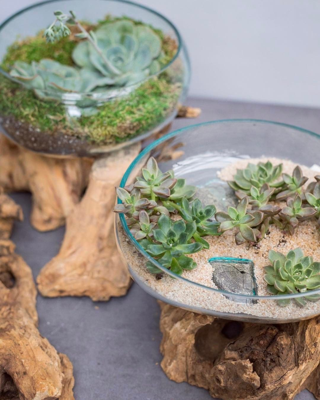 Ideas For Gl Terrariums Succulents Tillandsias Or Even Greenery The Terrarium Is Strong Over Here With These New Driftwood Pieces