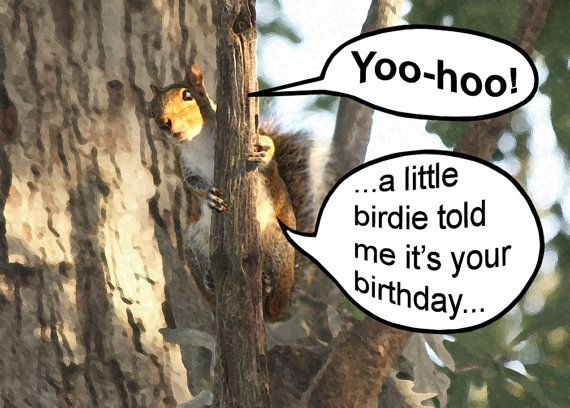 Happy Birthday Card Squirrel Funny Birthday Greeting Card Etsy Funny Birthday Greeting Cards Birthday Humor Happy Birthday Cards