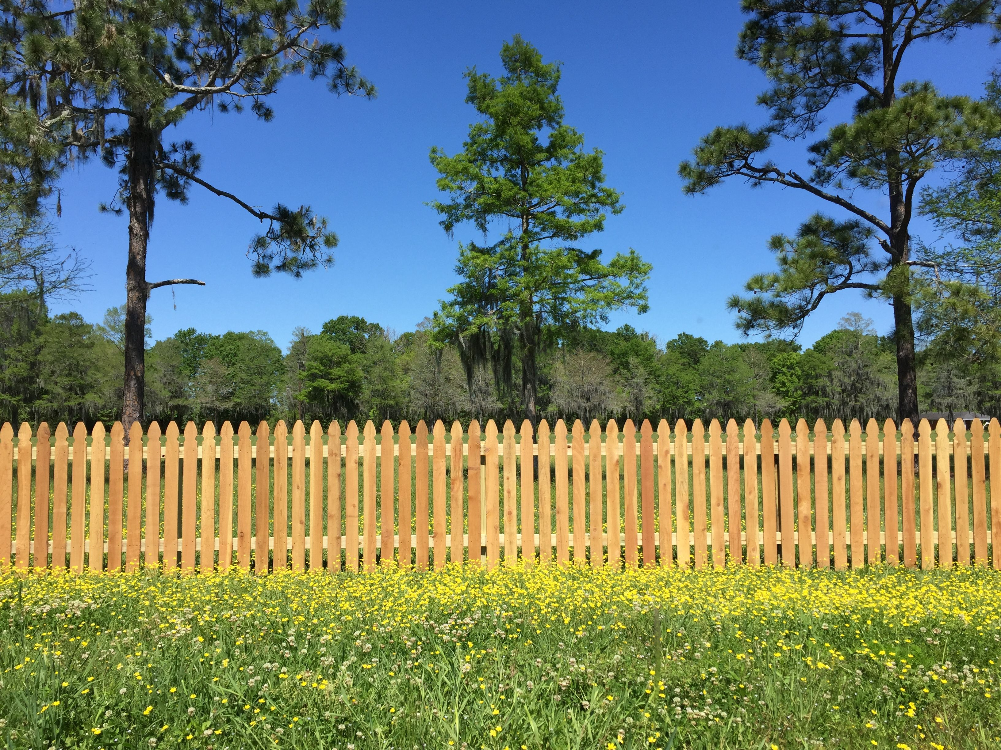 4 Ft Cedar Picket Fence Wood Fence Design Backyard Design Fence