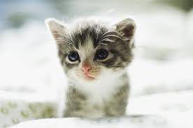 very cute kitten - Tìm với Google
