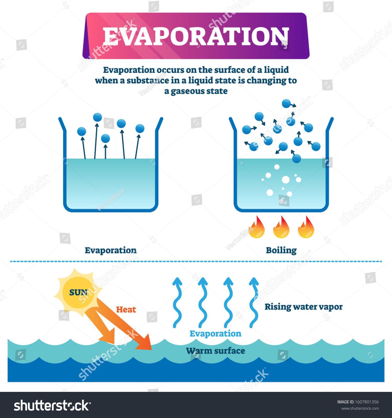 Evaporation Vector Illustration Labeled Liquid Surface Substance Change To Gas State Scheme Educational Explanation D Evaporation Surface Vector Illustration