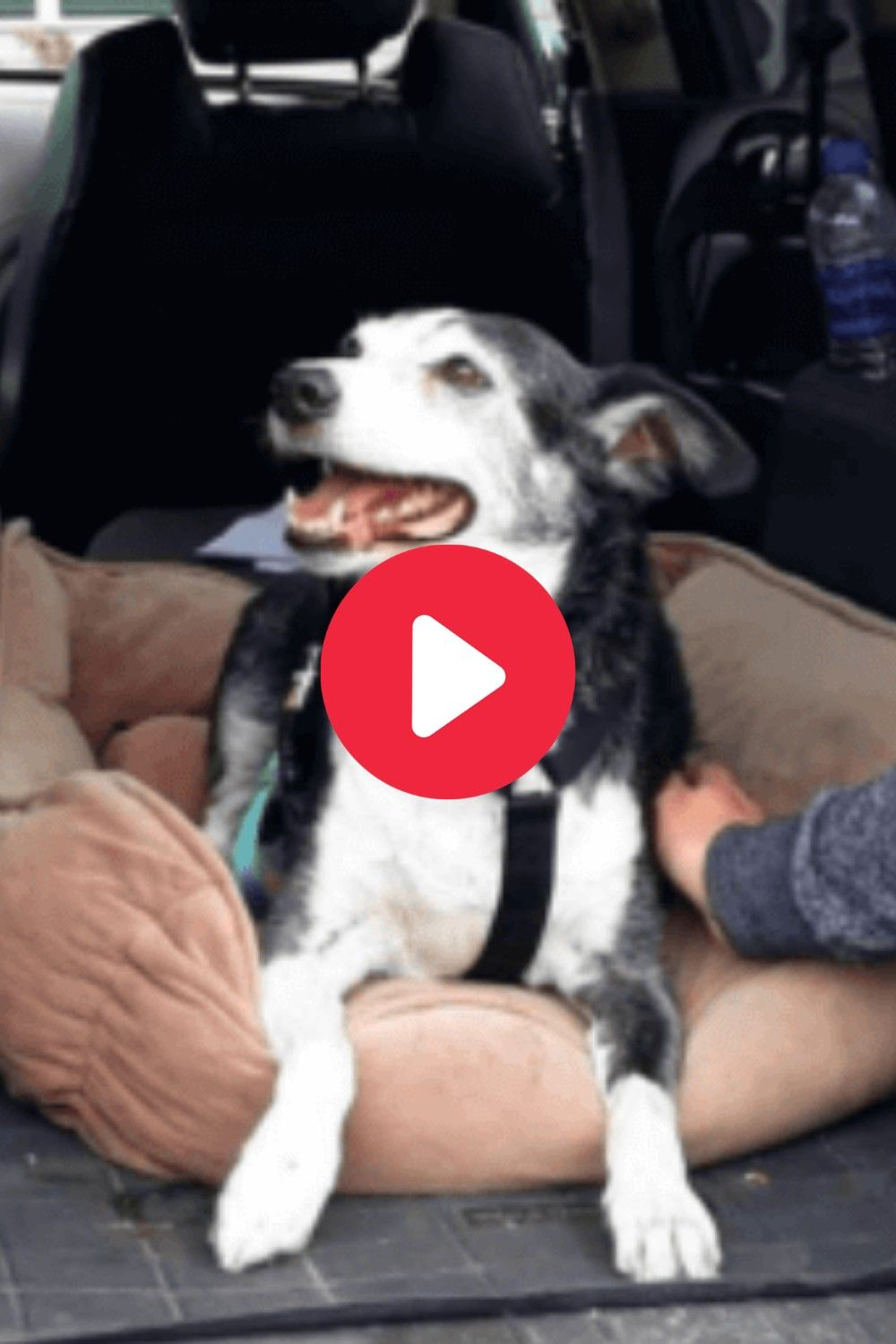 The vehicle was abandoned on the side of the road and the owner was gone. #dogs #dogsoftwitter #dogsofinstagram