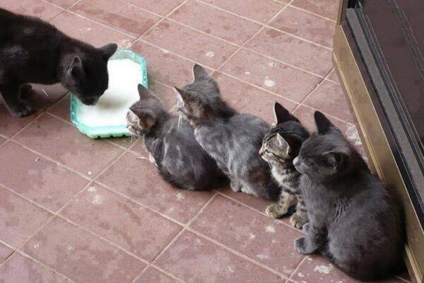 Картинки по запросу Funniest cats