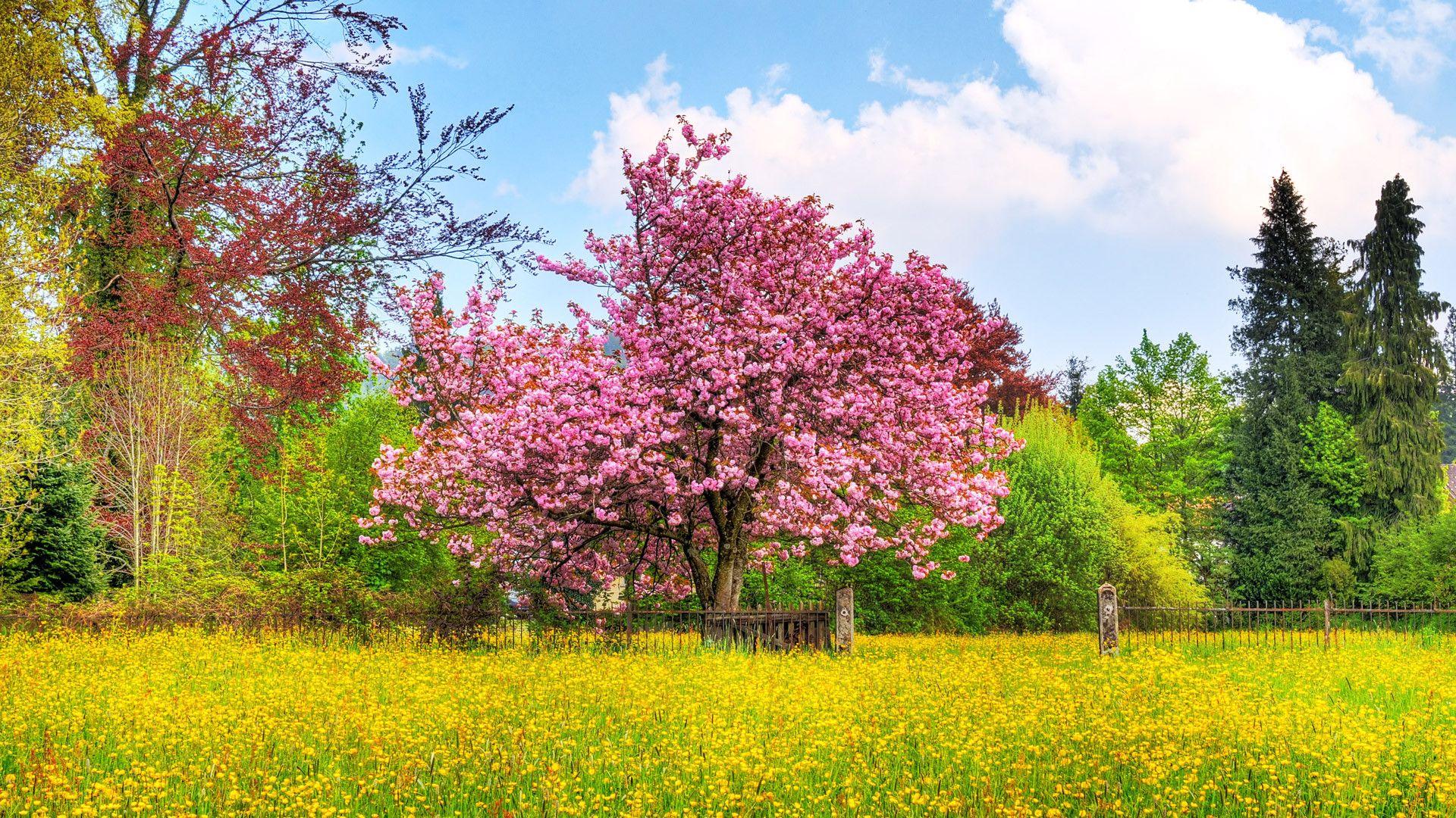 Hd Wallpapers 1080p Nature Spring Wallpaper Spring Landscape Spring Desktop Wallpaper