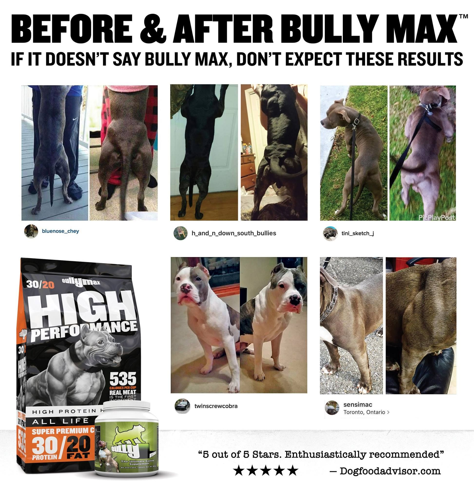 Before And After Pictures Bully Max Bullying Dog Ages