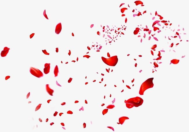 Petal Pink Petals Red Petals Png Transparent Clipart Image And Psd File For Free Download Red Rose Petals Red Petals Red Roses