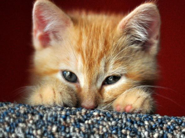 Orange tabby is my favorite color! ;-)