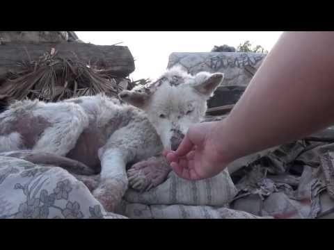 Dackel Information Fur Kinder Anna Und Die Haustiere Youtube In 2020 Haustiere Wilde Tiere Dackel