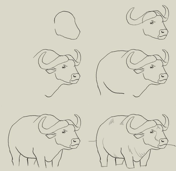 how to draw water buffalo | Animales en 2018 | Pinterest