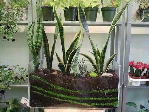 sansevieria terrarium Terrariums Plants, Succulent terrarium und Terrarium ~ 07123836_Sukkulenten Terrarium Einrichten