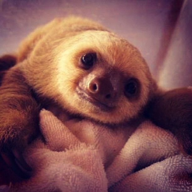 Sloth :)   Fur Babies   Pinterest