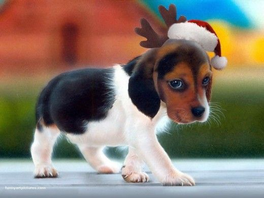 Dog Christmas Wallpapers Foxhound Puppy Cute Small Dogs Cute Animals