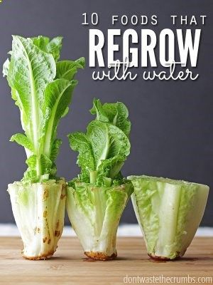 Great money saving idea to regrow food in water. Perfect if you don't have room for a garden & are trying to save a few bucks! :: DontWastetheCrumb...