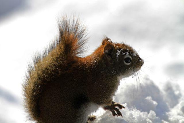 chipmunks and squirrels | Squirrels and Chipmunks