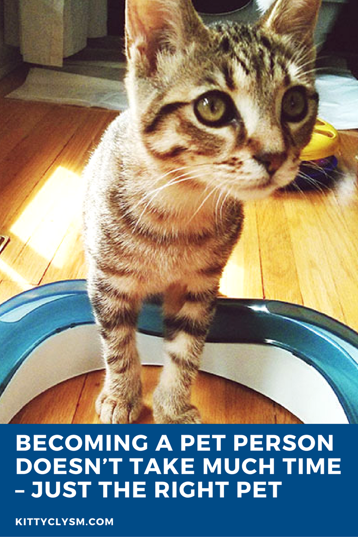a Pet Person Doesn't Take Much Time Just the