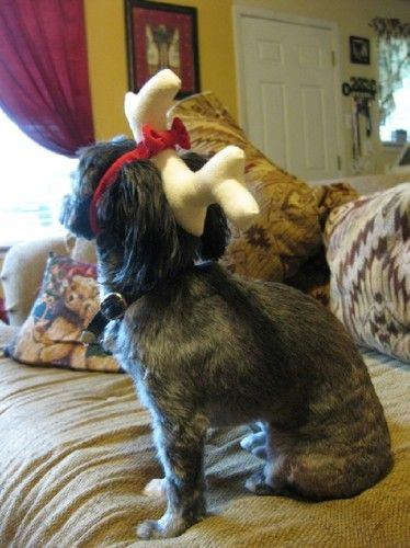 Grinch Dog Costume One Antler