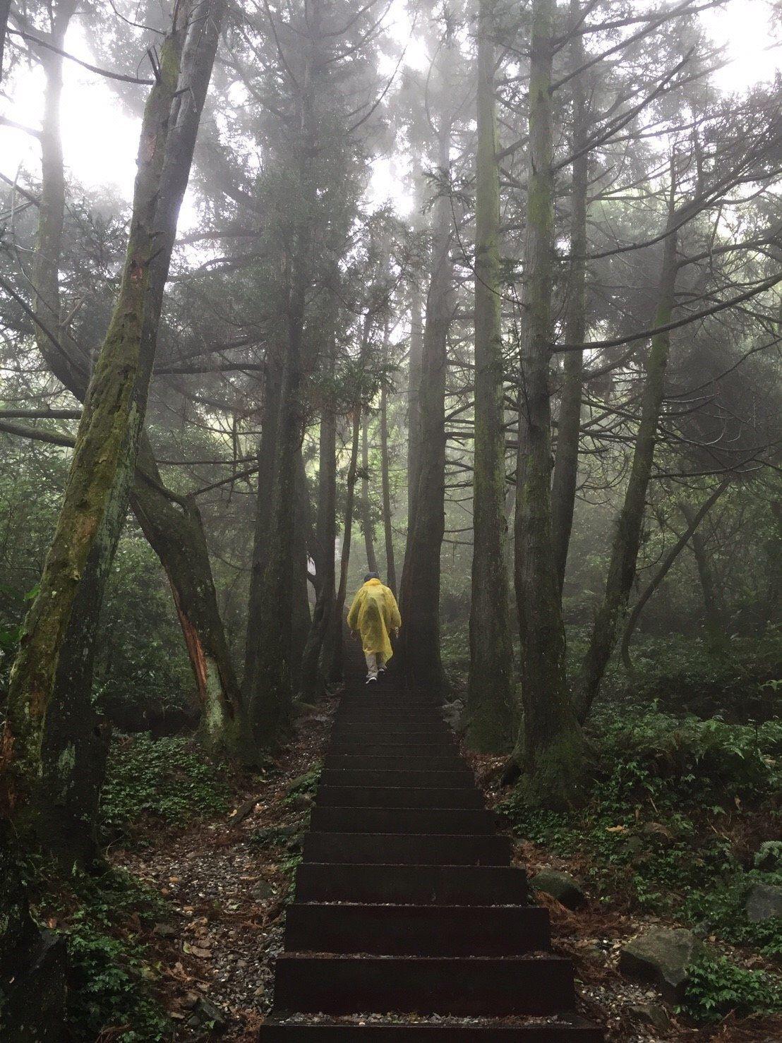 台湾「阳明山」超详细游玩攻略!泡温泉、观花田、看夜景、品美食! National parks, Country