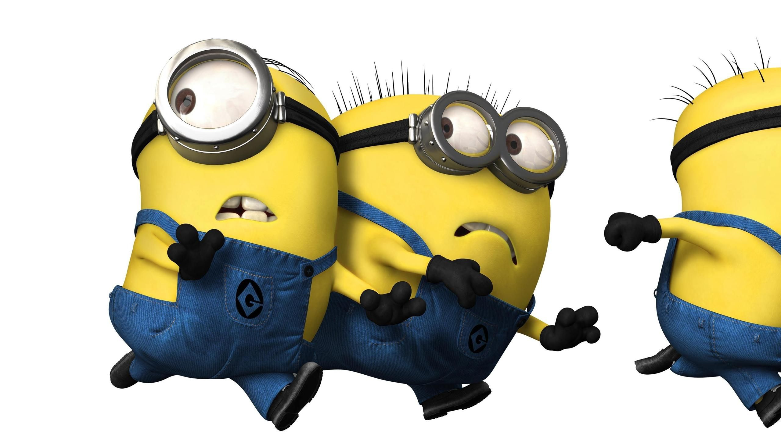60f4385973d6eb8197d9ee9edd1e6745 cartoons despicable me funny wallpapers images photos 2560�1440,Download Funny Minion Memes