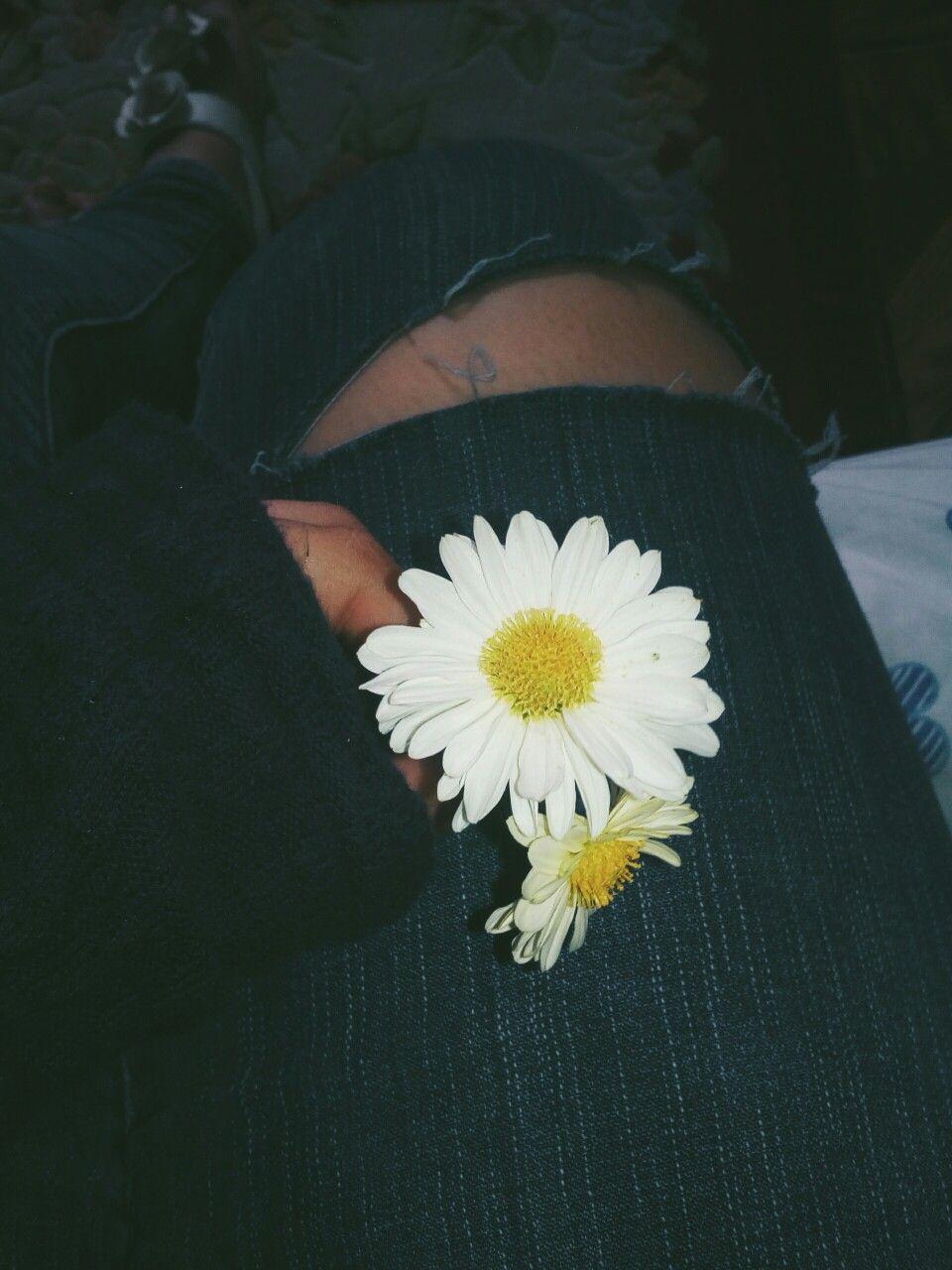 Flowers Tumblr T U M B L R Pinterest Flowers
