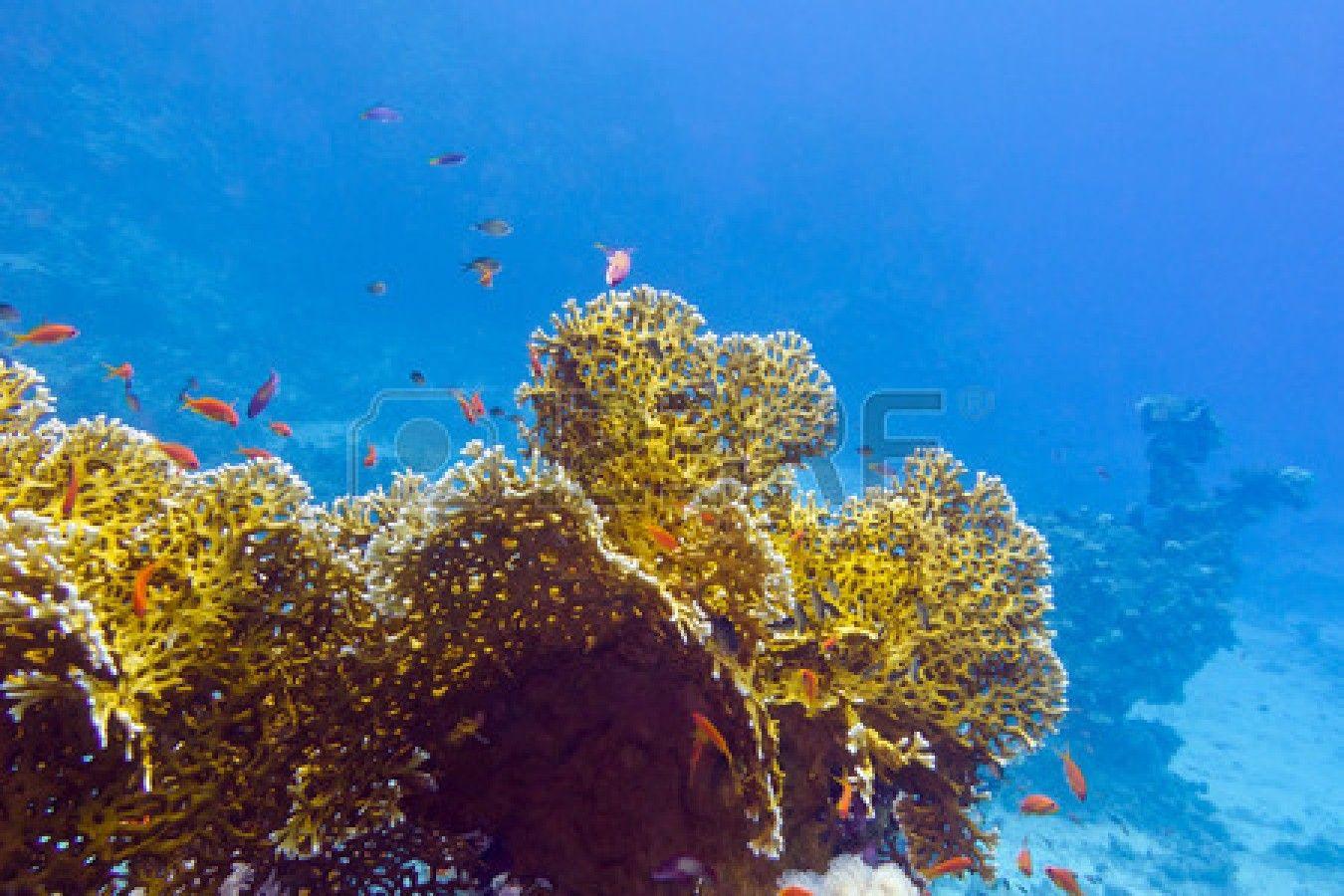 Stock Photo Fondo De Mar Agua Azul Y Coral